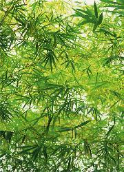 Poster para pared - Bamboo Enmarcado de cuadros