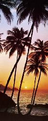 Poster para pared - Sunny palms Enmarcado de cuadros