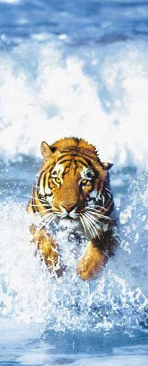 Poster para pared - Bengal tiger Enmarcado de cuadros