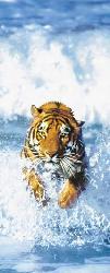 Poster para pared - Bengal tiger Marcos y Cuadros