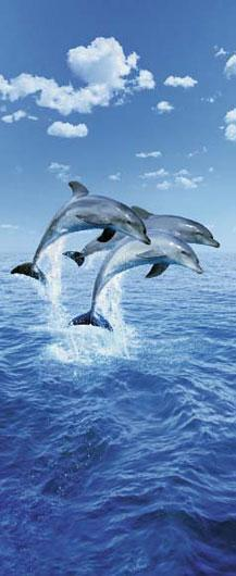 Poster para pared -Three dolphins