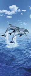 Poster para pared -Three dolphins Marcos y Cuadros