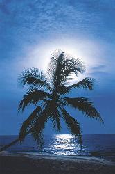 Poster - Moonlight Enmarcado de cuadros