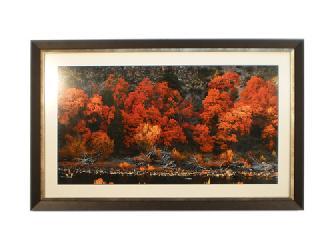 Cuadro - Bosque Sureño Enmarcado de cuadros