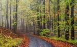 Sendero en el bosque Enmarcado de laminas