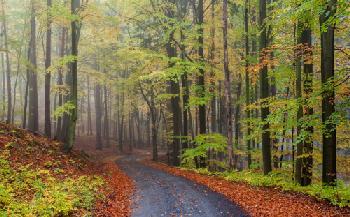 Sendero en el bosque Enmarcado de cuadros