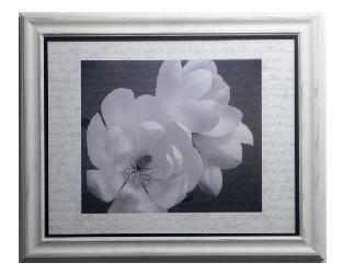 Cuadro - Winter Magnolia Enmarcado de laminas