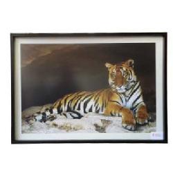 Cuadro - Tigre  Enmarcado de laminas