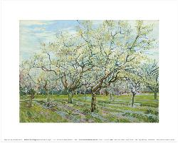 Vincent Van Gogh Ciruelos en Flor Enmarcado de laminas